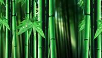 流光风格环保绿竹林唯美背景