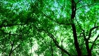 流光风格环保绿森林唯美背景