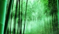 竹林流水自然风光特效后期视频素材