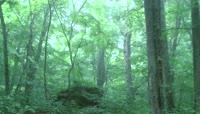 唯美的绿色森林与山间小溪\(有音乐\)
