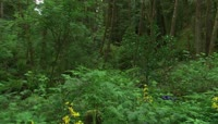 实拍森林环保绿清新背景