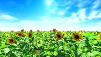 流光风格向日葵花园唯美背景