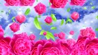 红玫瑰(有音乐)