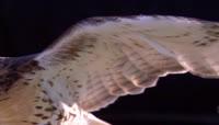 08-鹰的翅膀翅特写