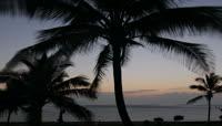 夕阳下的海滩椰树实拍视频素材