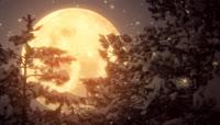大月亮下鹅毛大雪的圣诞夜 黑夜中树上挂满白白的雪节日素材