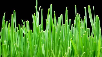 嫩芽植物快速生长发芽高清实拍 可抠像