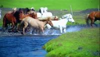 骑马奔跑在沙漠里奔驰 晚霞下的马奔跑慢动作特写 马群高清实拍 \(4\)