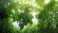清晨唯美景色薰衣草园向日葵蒲公英大树高清视频实拍