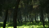 森林 树林中一棵棵树木 绿油油的草地高清实拍视频素材