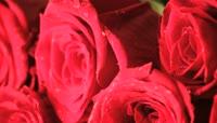 新鲜艳丽红玫瑰白玫瑰近距离移动特写高清实拍 \(1\)