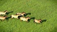 在草原上奔跑奔腾的马群 群马奔驰高清实拍视频素材 \(1\)