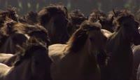 在草原上奔跑奔腾的马群 群马奔驰高清实拍视频素材 \(2\)