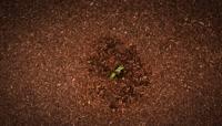 植物快速生长发芽 一颗菜芽从土地里快速冒出生长实拍镜头