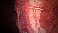 细胞快速生长 医疗科技表皮组织细胞生长高清实拍视频素材