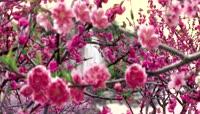 中国风水墨风格世外桃源桃花瀑布