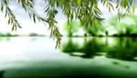 流光风格湖边杨柳唯美背景