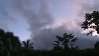 木瓜树上掠过的流动云彩素材 Clouds\-PapayaTree\-HDV\-5282013