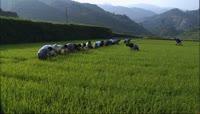 农业劳作实景拍摄