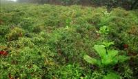 农业作物实景拍摄