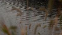 植物河面镜头焦距切换实景拍摄