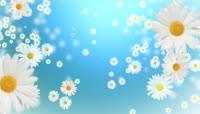 掉落的小花朵背景素材 Falling Daisies HD