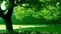 流光风格3D环保绿森林唯美背景
