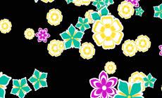 以绚丽花朵为主题的转场素材 带alpha通道 \(1\)