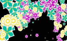 以绚丽花朵为主题的转场素材 带alpha通道 \(2\)