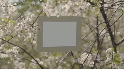 花园里的相册模板素材