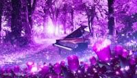 紫色树林钢琴视频