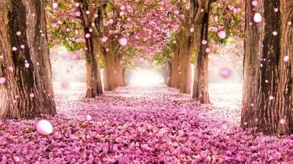花开盛夏LED背景