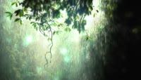 动感幻化光波飘零热带森林 光斑森林视频素材