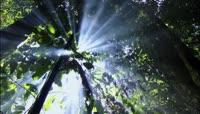 阳光森林视频素材