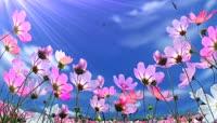 鲜花花草视频