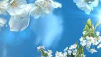 春风明媚爱情家庭生活图文