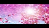 动态桃花背景视频