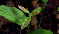 植物生长视频素材