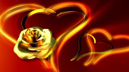 金色玫瑰视频素材
