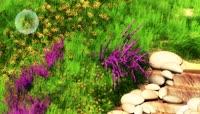 大自然的花草石头