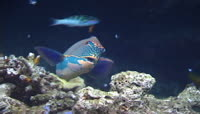 海底世界高清视频素材