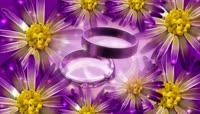 鲜花戒指视频素材