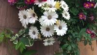 鲜花实拍视频