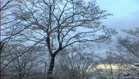 大雪风景树木上的雪