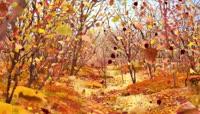 秋风落叶 无缝循环视频素材
