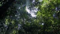 树林视频素材