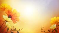高清唯美鲜花动态背景视频