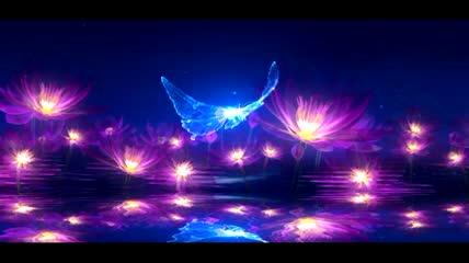 紫色莲花和飞过的蝴蝶LED视频背景素材