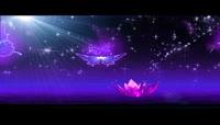 蝴蝶和莲花 视频素材片头