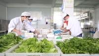 蔬菜辣椒清洗处理运输农产品包装高清视频